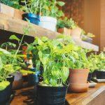 Tips to Start an Indoor Garden