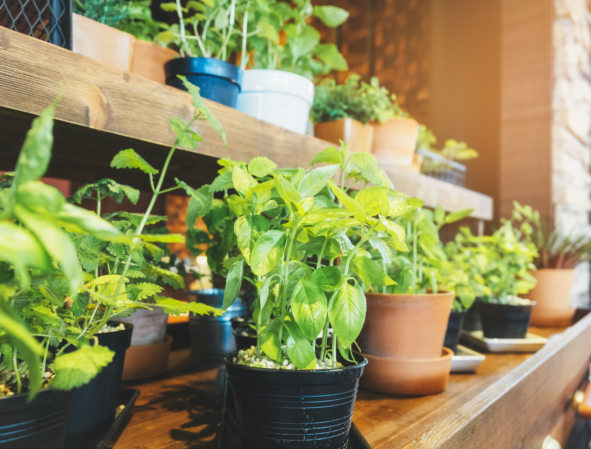 Tips to Start an Indoor Garden
